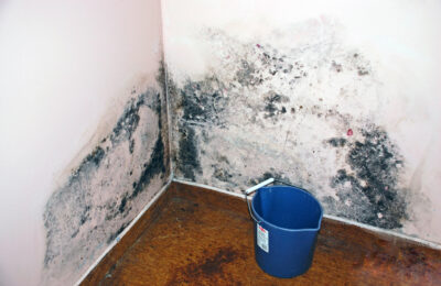 Mold Too Hot To Grow